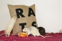 Exploring the cushion